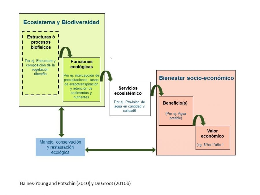 Modelo conceptual para la vinculación de los ecosistemas y el bienestar humano. Adaptado desde Haines-Young and Potschin (2010) y De Groot (2010)
