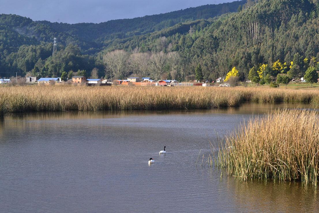 Humedales de Valdivia