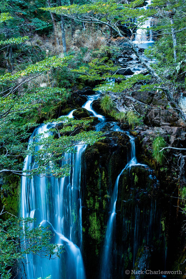 Reserva Nasampulli Chile FORECOS