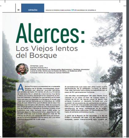 alerces